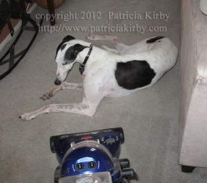 greyhound and vacuum cleaner