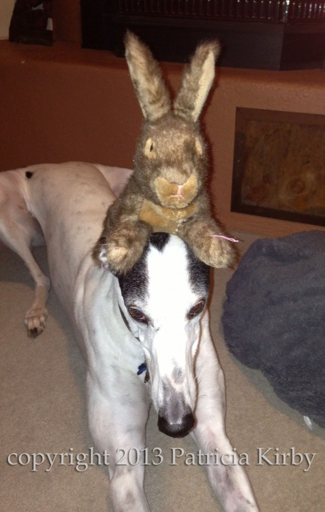 greyhound with rabbit on its head